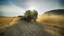 Die Hitzewelle bedroht Ernten und Existenzen