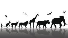 """¿Qué especie responde mejor a """"la supervivencia del más apto""""?"""