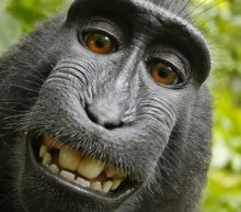 No, A Monkey Can't Copyright His Selfies, Federal Appeals Court Rules