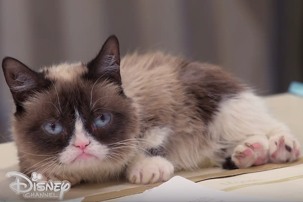 Grumpy Cat To Guest Star On Bizaardvark Exclusive Video