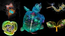 PHOTOS: Fluorescent turtle embryo wins forty-fifth annual Nikon Small World Competition