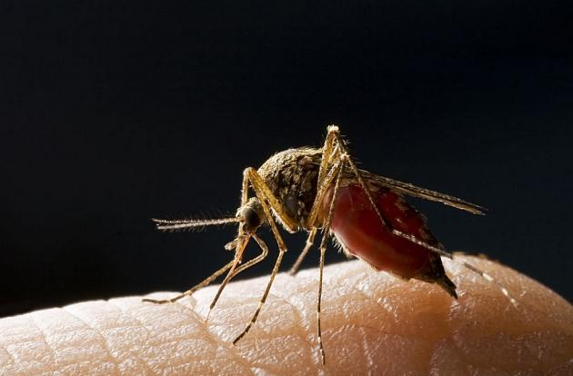 Hand-held malaria tester sequences DNA, suggests meds quickly