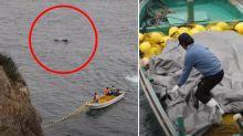 Heartbreaking reason 'panicked' dolphin won't escape from hunters