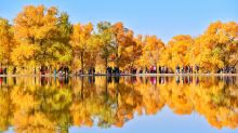 Stunning fall foliage, Day of the Girl Child, swans on a lake: World in Photos, Oct. 11