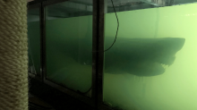 Inside forgotten wildlife park with decaying great white shark