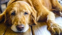 Protect Your Cat or Dog From These Common Pet Poisons