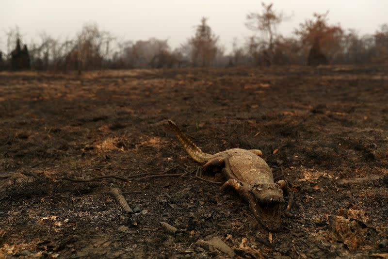 The Wider Image: In Brazil, it's not just the Amazon that's burning. The world's largest wetland is on fire too