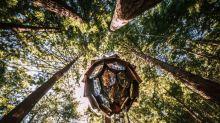 Duerme en una cabaña piña de cristal en medio del bosque