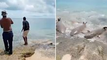 'Scary but beautiful': Fishermen just inches away from shark frenzy