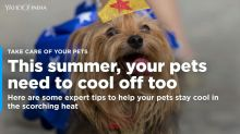Help your pets beat the scorching summer heat