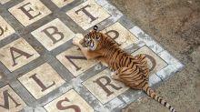 Fort Boyard: les tigres de l'émission ne seront pas remplacés après leur retraite