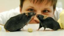 A necessary evil? What you need to know about animal research