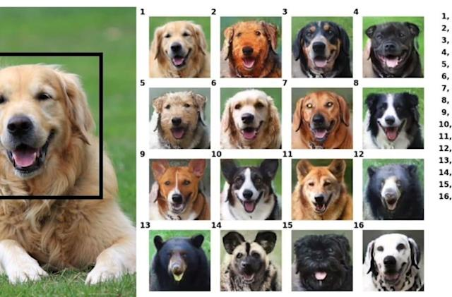 NVIDIA's AI can put your pet's smile on a random animal
