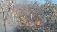 Mourão diz que queimadas no Pantanal são provocadas pela seca