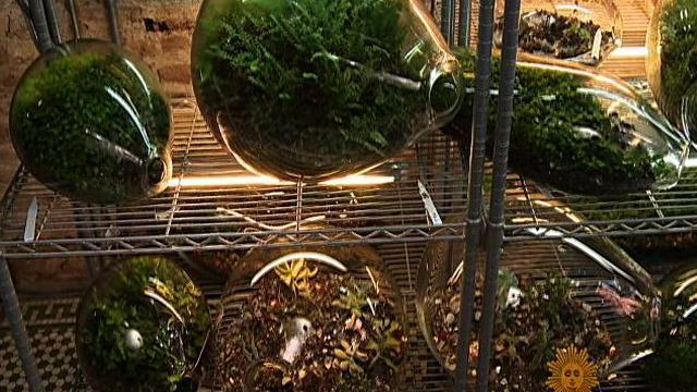 The Growing Trend of Terrariums