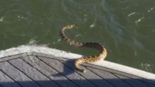 The Snake in the Lake: Boaters Scared Out of Water by Rattlesnake That Climbed Into Vessel