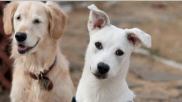 Trainer turns abandoned dogs into rescuers