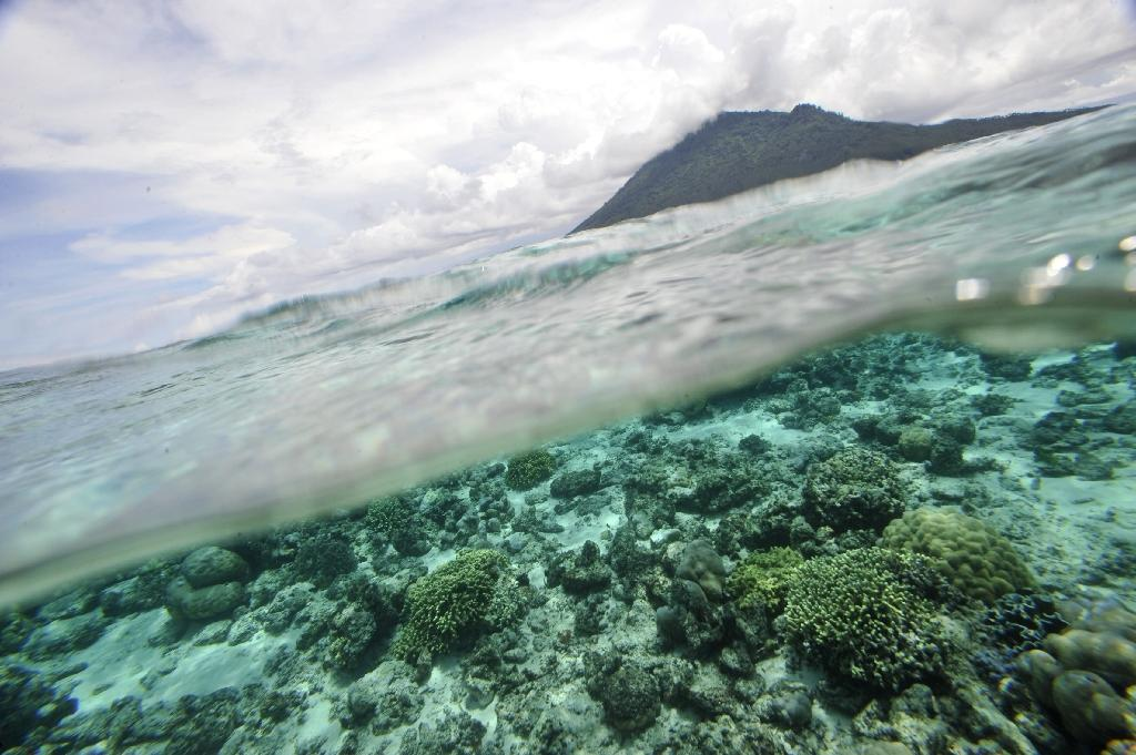 On the opening day of the United Nations' first-ever global conference on protecting the oceans, international researchers report that protected ocean areas and marine reserves are key tools to combat climate change