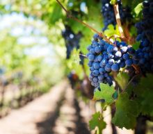 Will Trump Winery Be Affected By President's Immigration Policy?