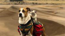 Como perro y gato explorando el mundo