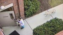 Coyote follows doctor into office