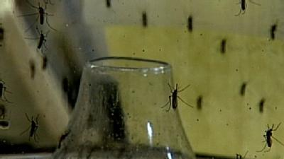 Disease-Carrying Mosquitoes Prompt Warning
