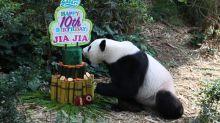 Giant pandas Kai Kai and Jia Jia celebrate birthdays with bamboo cakes