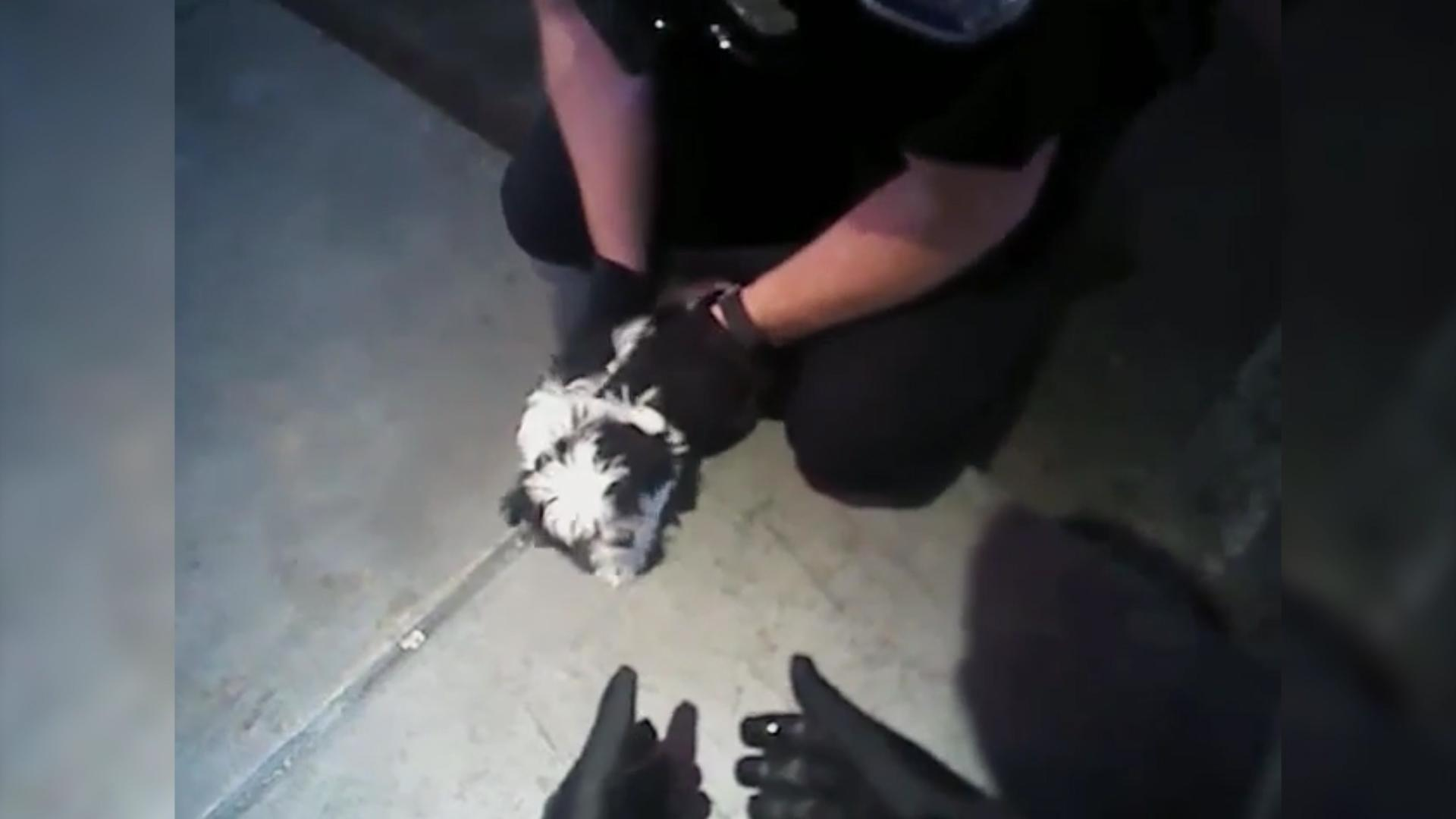 Flickr Video Dog Resuscitated