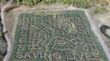 Lumsden corn maze honours 'heroes' that saved family business