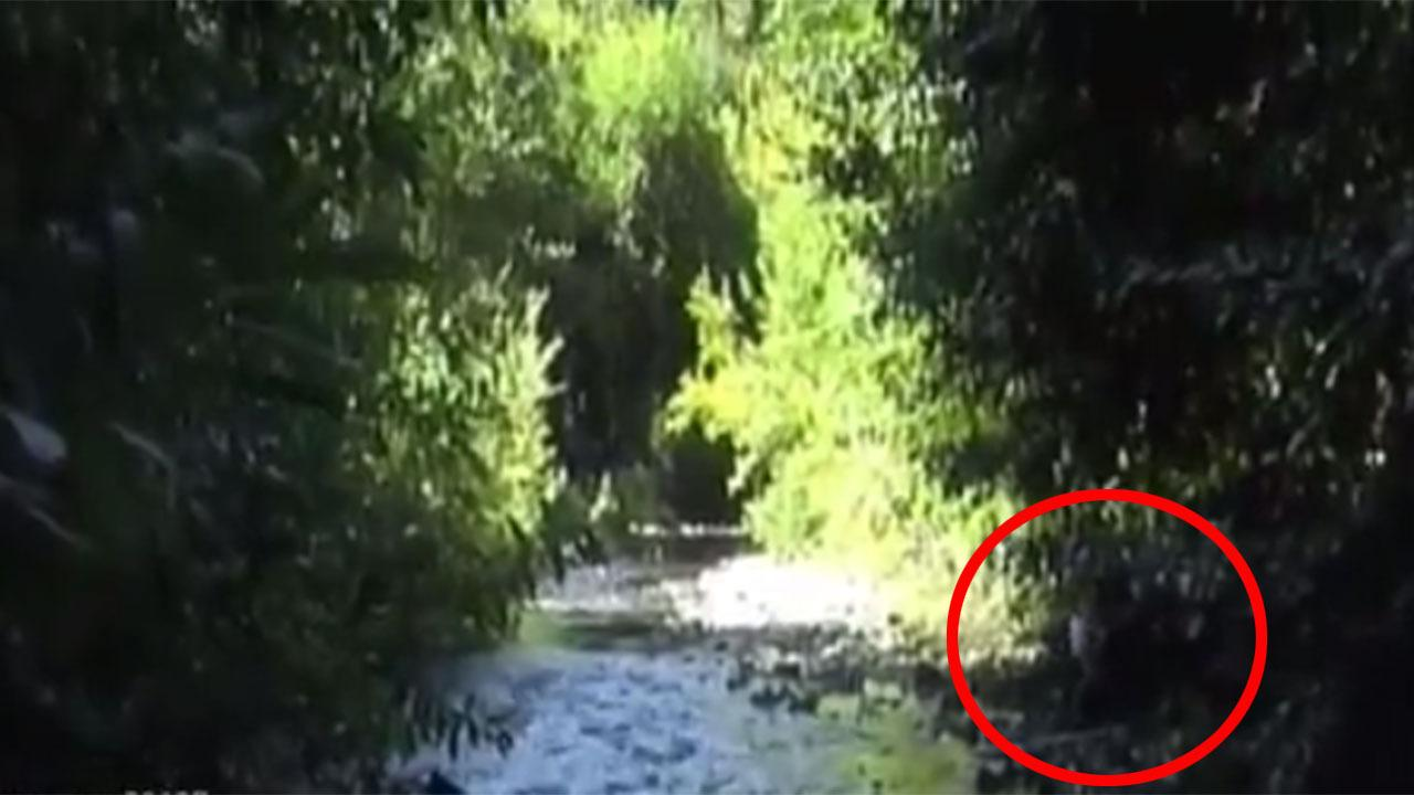 Bigfoot hunter uncovers sighting of the mythical creature in old footage