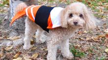 How to Make a Last-Minute Sushi Costume for Your Pet