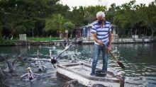 Pelicans befriend Cuban man living by the sea