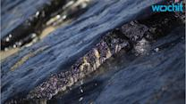 Oil Spill Shouldn't Ruin Your California Beach Vacation Plans