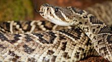 Rattlesnakes bit two hikers at Yosemite National Park in August. Here's how you can stay safe.