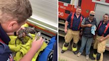 Kitten resuscitated by firefighters after being pulled from drainpipe