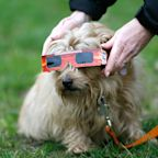 The Total Solar Eclipse Is Almost Over, But These Adorable Photos of Dogs in Eclipse Glasses Are Forever