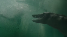 Tense first trailer for Sam Raimi's 'Crawl' looks like 'Jaws' with alligators