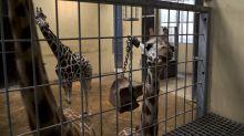 Animalistas logran una victoria en el Zoo de Barcelona