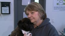 'Not a case of neglect': 48 puppies, dogs rescued from northern Alberta community