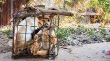 'Las calles del horror': el comercio de animales salvajes sigue a pesar de la alarma por el coronavirus