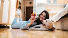 12 things that'll make your dog's life better right now