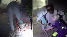 'You're in a pickle': Woman calls police after massive snake coils around her