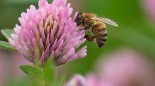 Pornhub: Bienenpornos für den guten Zweck