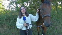 """""""Maintenant mon cheval a peur la nuit, il tourne en rond"""": des propriétaires d'équidés mutilés démunis face aux attaques"""