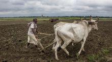 Maharashtra Farmers 'Reclaim' Land Acquired By Nirav Modi's Firm