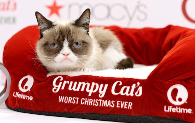 Grumpy Cat turns a genetic defect into a $100 million empire