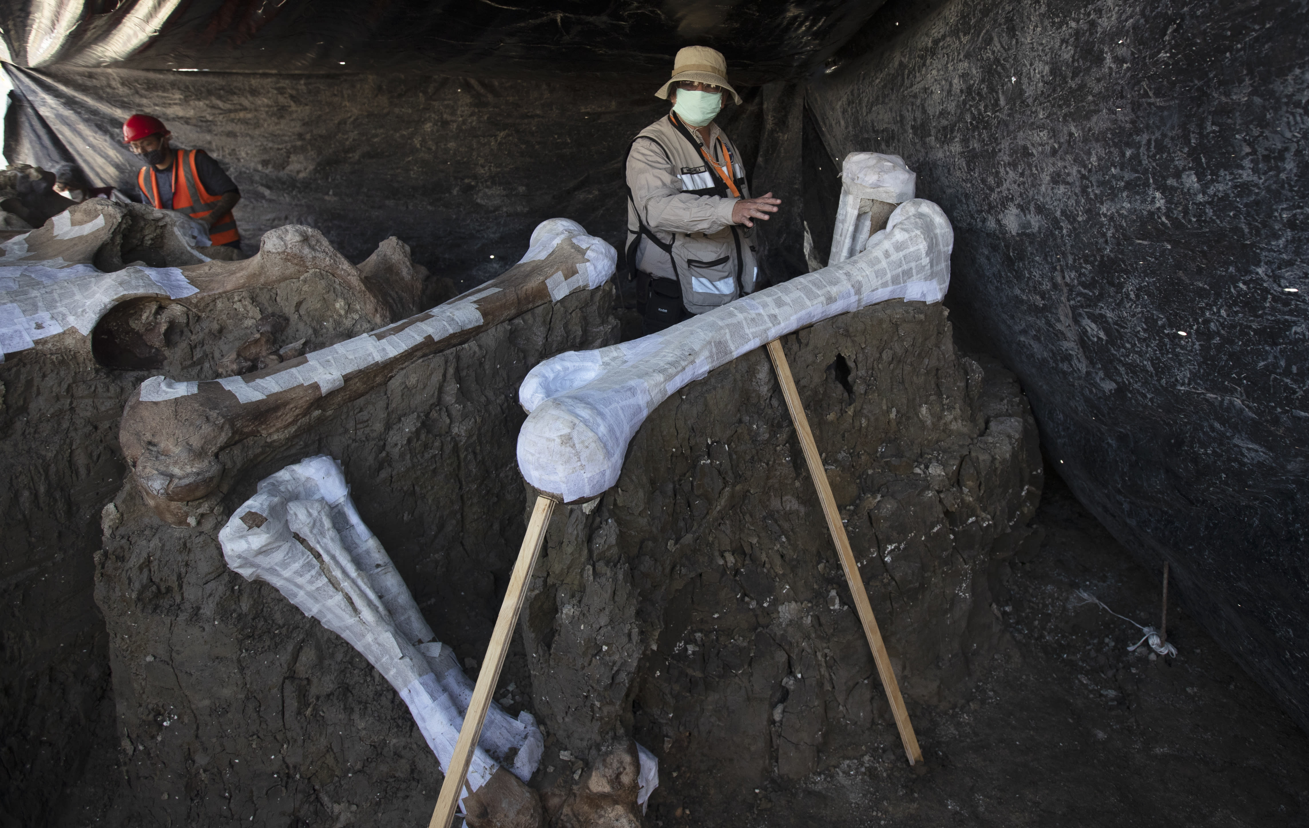 Ruben Manzanilla Lopez of the National Anthropology Institute and responsible for the preservation work in the area shows the skeleton of a mammoth that was discovered in the construction site of Mexico City's new airport in the Santa Lucia military base, Mexico, Thursday, Sept. 3, 2020. The paleontologists are busy digging up and preserving the skeletons of mammoths, camels, horses and bison as machinery and workers are busy with the construction of the Felipe Angeles International Airport by order of President Andres Manuel Lopez Obrador. (AP Photo/Marco Ugarte)