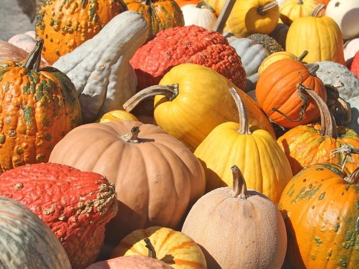 abundance, agriculture, autumn, background, colorful, decoration, fall, farm, farmers market, food, fresh, full frame, gourds, halloween, ha
