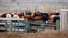 'A new hazard': Union representing federal meat inspectors want safety guarantee