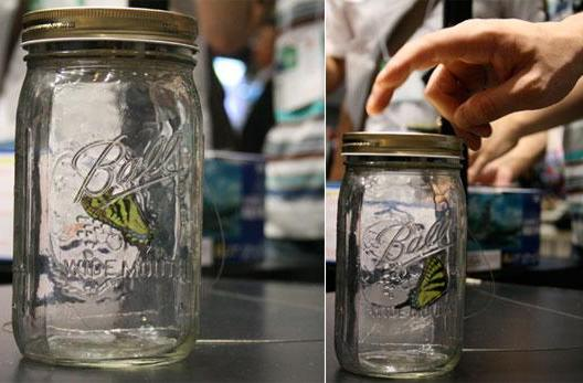 ChouChou Electric Butterfly flutters to life inside a jar